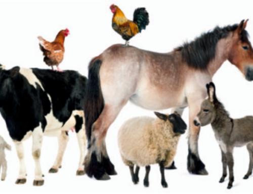 Bien-être animal : les mesures annoncées par le Gouvernement