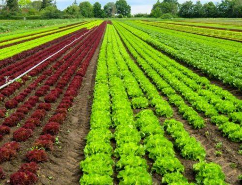 Information et traçabilité des produits agricoles et alimentaires