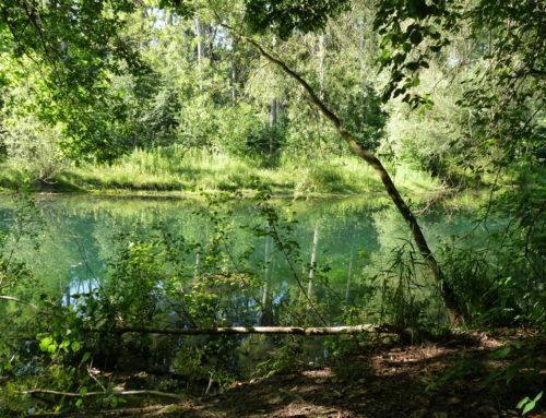 Création de la réserve naturelle nationale du massif forestier de la Robertsau et de La Wantzenau