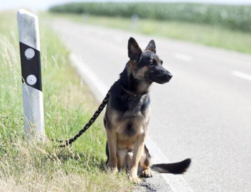 Des mesures concrètes en faveur de la lutte contre la maltraitance animale